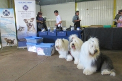 The Shed - Klipriver - judging dog show