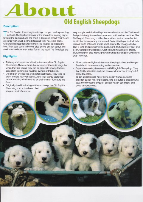 article-pets-galore-page-2_20150211_0001
